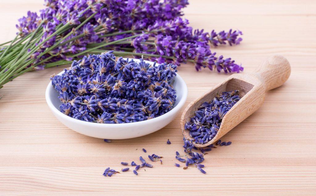 Lavender Herbs Flowers Lavendula - FinjaM / Pixabay