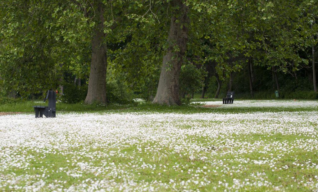 Park Carpet Of Flowers Benches  - dendoktoor / Pixabay