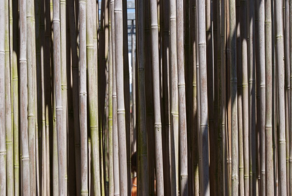 Bamboo Nature Zen Plant Wood  - goddeerisvincent / Pixabay