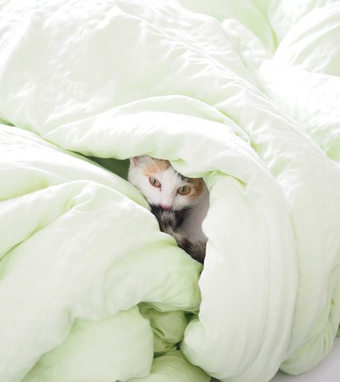 Cat Bed Blanket Duvet Hide Kitty  - Hans / Pixabay