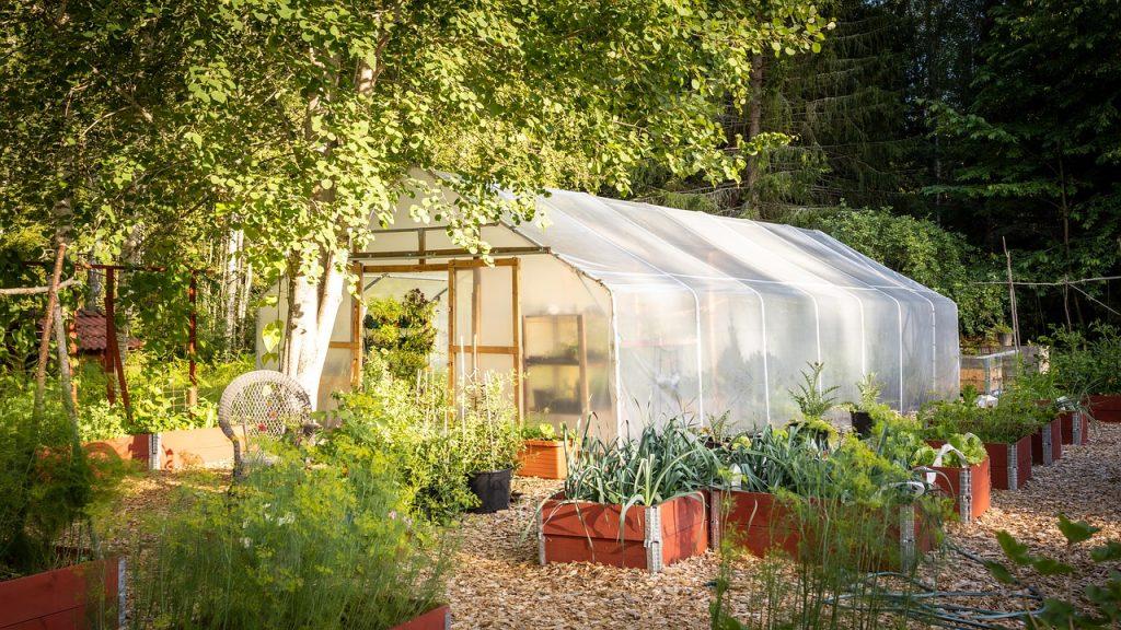 Tunnel Greenhouse Cultivation  - DanielSjostrand / Pixabay